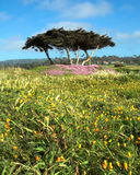 17 wildflowers Монтерей мили привода california Стоковое Фото