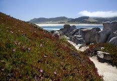 1705朵海滩carmel mg野花 库存照片
