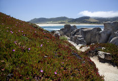 1705 wildflowers mg carmel пляжа Стоковые Фото