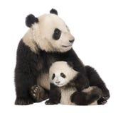 18个大猫熊巨型melanoleuca月熊猫 免版税库存图片