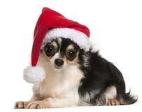 18个奇瓦瓦狗帽子月圣诞老人佩带 图库摄影