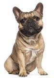 18个牛头犬法国月坐 免版税图库摄影