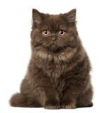 18个猫折叠月苏格兰开会 免版税库存照片