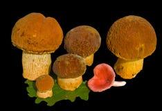 18个蘑菇 免版税库存照片