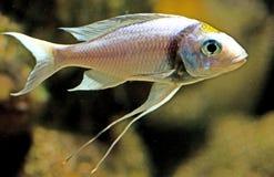 18条水族馆鱼 库存图片