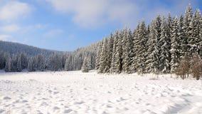 18森林没有多雪 免版税库存图片