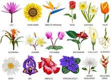 18 art av färgrika blommor Arkivfoto