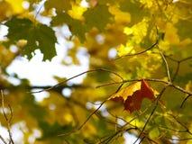 18 jesieni zdjęcie stock