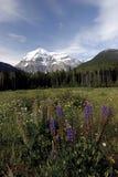 181 View of Mountain Robson Stock Photo
