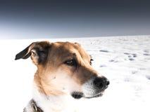 狗(186) 库存照片