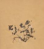 1896 χρονολογημένος ξηρός τρύγος εγγράφου λουλουδιών Στοκ Εικόνες