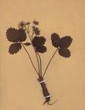 1896 χρονολογημένος ξηρός τρύγος εγγράφου φυλλώματος λουλουδιών Στοκ φωτογραφία με δικαίωμα ελεύθερης χρήσης