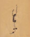 1896 χρονολογημένος ξηρός τρύγος εγγράφου φυλλώματος λουλουδιών Στοκ φωτογραφίες με δικαίωμα ελεύθερης χρήσης