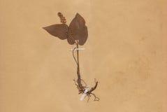 1896 daterad torkad tappning för blommalövverkpapper Royaltyfri Fotografi