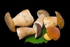 19个蘑菇 免版税库存图片