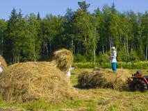 19割晒牧草西伯利亚 免版税库存图片