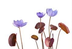 19朵早期的花春天 库存照片