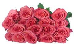 19朵浅粉红色的玫瑰 库存图片