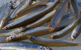 19条鱼冰 免版税库存图片