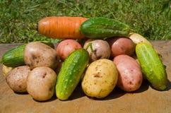 19棵蔬菜 免版税库存照片