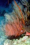 19 andaman珊瑚海惊奇的世界 免版税库存照片