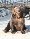 19 Moscow zoo Obraz Stock