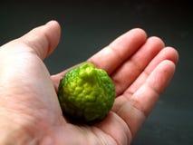 19 owoce cytrusowe Obraz Royalty Free