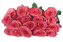 19 roses rose-clair Images stock