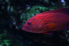 19 tropikalnych ryb Fotografia Royalty Free