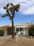 1950s motel: Joshua tree Stock Photo