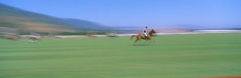 1998 het Kampioenschap van het Polo van de Wereld Stock Foto