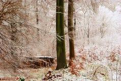 1ra nieve Imagen de archivo libre de regalías