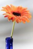 2个人造花系列 免版税库存照片