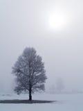 2个冷淡的有薄雾的结构树 库存图片