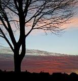 2个剪影日落结构树 库存照片