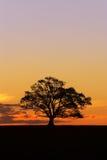 2个剪影日落结构树 免版税图库摄影