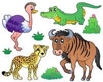 2个动物收集大草原 库存图片