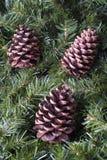 2个圣诞节锥体杉木 库存图片