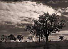 2个失去的结构树 库存照片