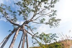 2个妖怪结构树 库存图片