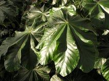2个密林叶子纹理 库存照片