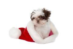 2个帽子小狗圣诞老人 免版税图库摄影