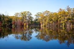 2个柏磨房池塘结构树 库存图片