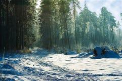 2个森林冬天 免版税库存照片