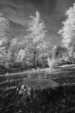 2个森林红外线横向树桩 库存图片