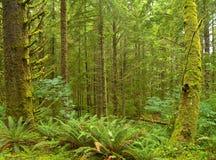 2个森林西北雨 免版税库存照片