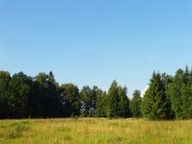 2个森林视图 免版税库存照片