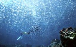 2个母亲海洋零件 库存图片