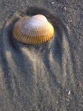 2个海滩加州桂壳 库存图片
