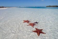 2个海滩天堂海星 库存图片